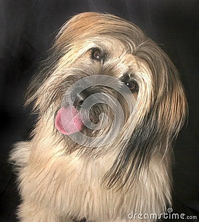 Free Dog Royalty Free Stock Photography - 1533787