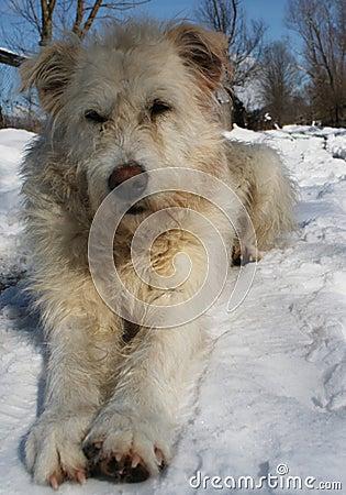 Free Dog Royalty Free Stock Photos - 16726498