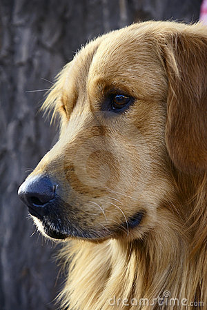 Free Dog Royalty Free Stock Photos - 17115278