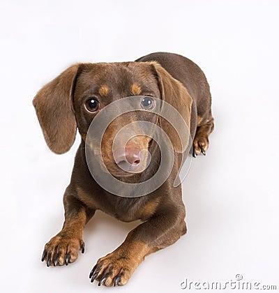 Free Dog Stock Photography - 1959402