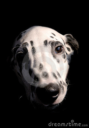Free Dog 2 Royalty Free Stock Photography - 724507