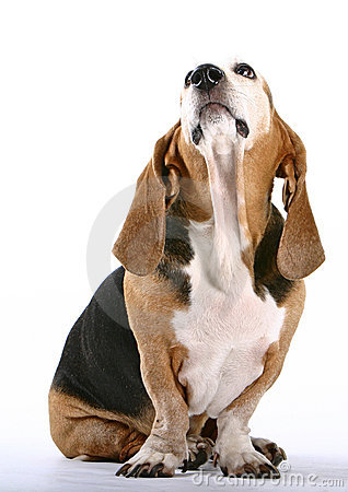 Free Dog Royalty Free Stock Photography - 216817