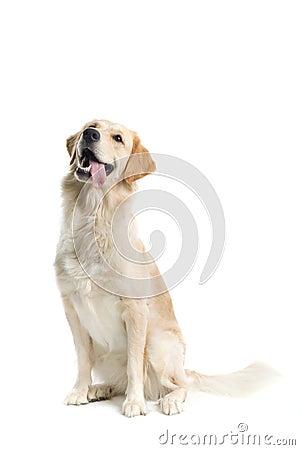 Free Dog Stock Photography - 2865942