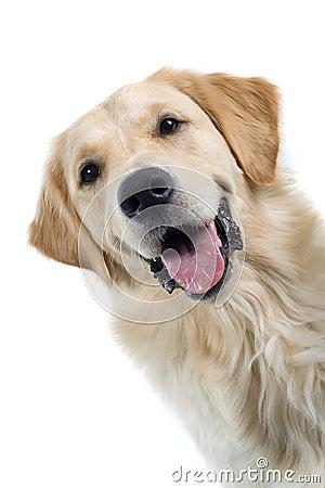 Free Dog Stock Images - 2865944