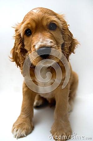 Free Dog Stock Photos - 3603223