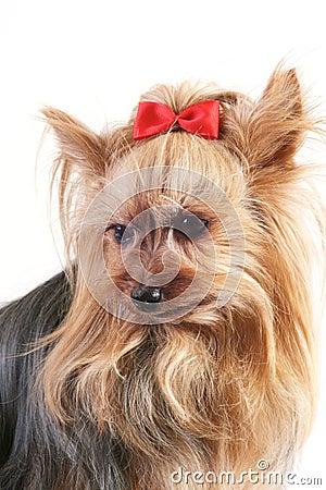 Free Dog Stock Photography - 4657242