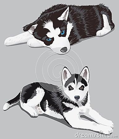 Free Dog Stock Images - 5021304