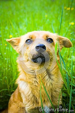 Free Dog Royalty Free Stock Photo - 5309735