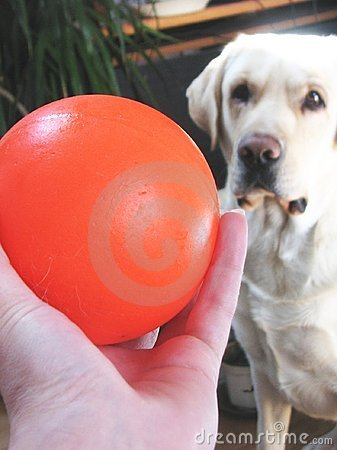Free Dog And Ball Royalty Free Stock Photography - 2458087