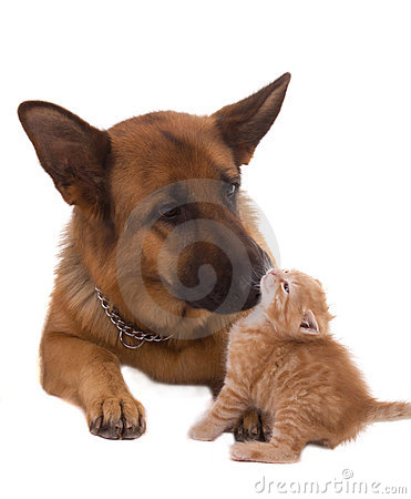 Free Dog And Cat Royalty Free Stock Image - 20237026