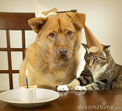 Free Dog And Cat Celebrating Birthday Royalty Free Stock Images - 1494779