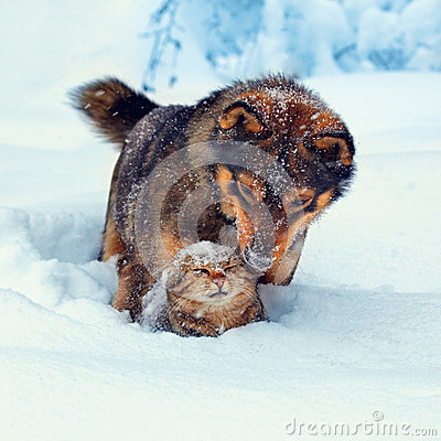 Free Dog And Cat In Snow Stock Photos - 47138583