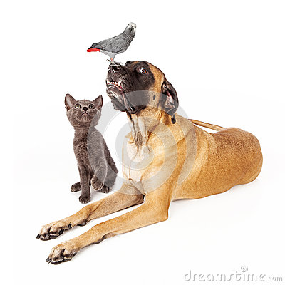 Free Dog And Cat Looking At A Bird Royalty Free Stock Photos - 34913868