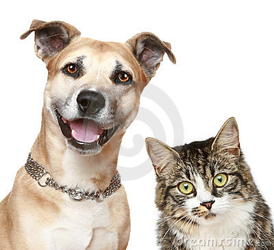Free Dog And Cat On A White Background Royalty Free Stock Photo - 19847715