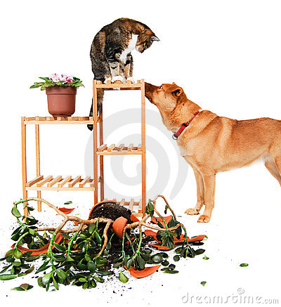 Free Dog And Cat Troublemakers Stock Photo - 4348660