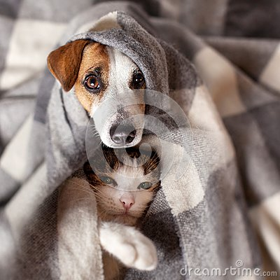 Free Dog And Cat Under A Plaid Stock Photography - 101007162