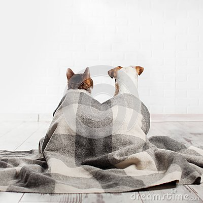 Free Dog And Cat Under A Plaid Stock Photo - 107250490