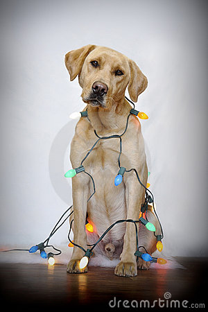 Free Dog And Christmas Lights Royalty Free Stock Photography - 17713297