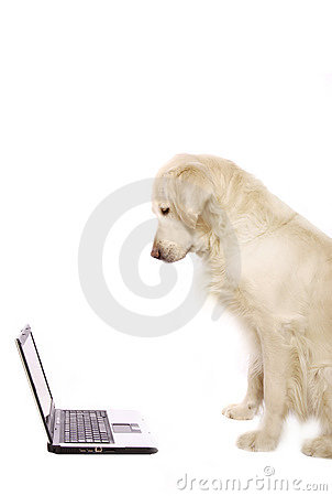 Free Dog And Laptop Royalty Free Stock Photo - 9336135