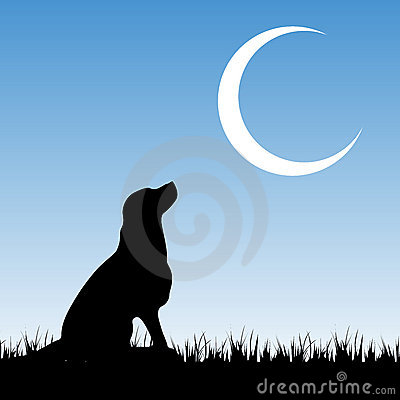 Free Dog And Moon Royalty Free Stock Photography - 12743457