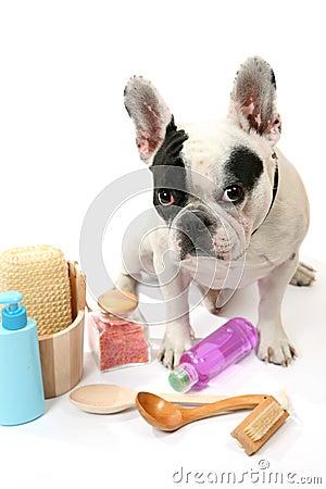Free Dog And Shampoo Stock Photography - 14216532