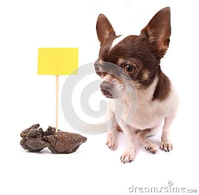 Free Dog And Shit Royalty Free Stock Image - 5239766