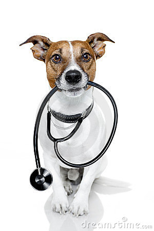 Free Dog As A Nurse Stock Image - 23515771
