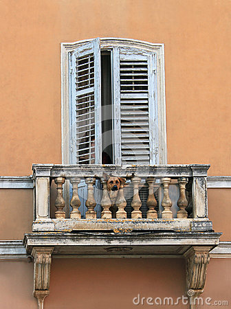 Dog on balcony