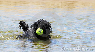 Dog Ball Water