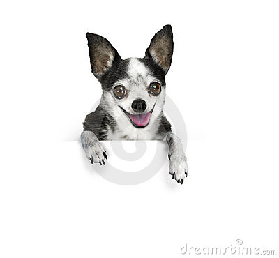 Free Dog Banner Royalty Free Stock Photography - 15287977