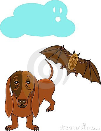 Dog And Bat