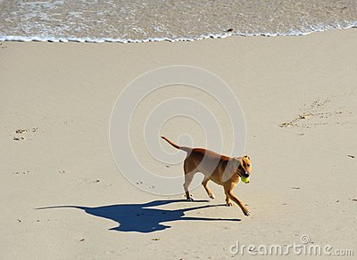 Dog at Beach