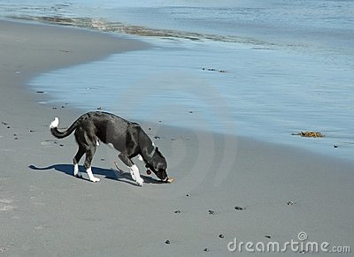Dog on the beach II