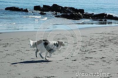 Dog on the beach III
