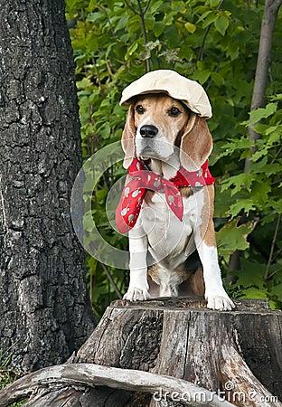Free Dog Beagle Royalty Free Stock Image - 22614356