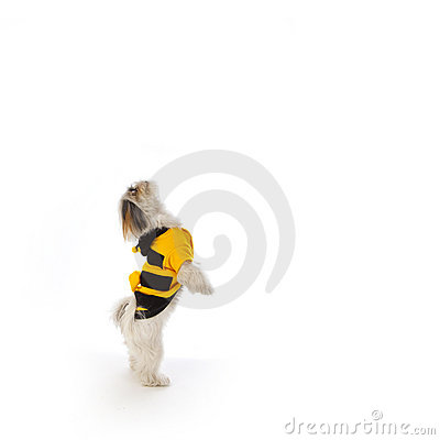 Dog bee