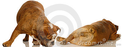 Dog Behavior Royalty Free Stock Photo - Image: 7082675