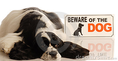 Dog with beware of dog sign