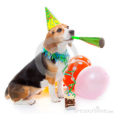 Free Dog Birthday Party Animal Stock Images - 29303144