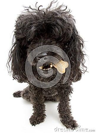 Dog With A Bone