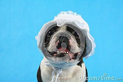 Dog bonnet