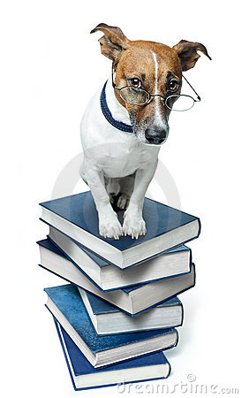 Dog on a book stack