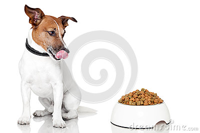 Dog bowl hungry meal eat