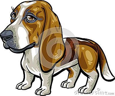 Dog Breeds: Basset Hound
