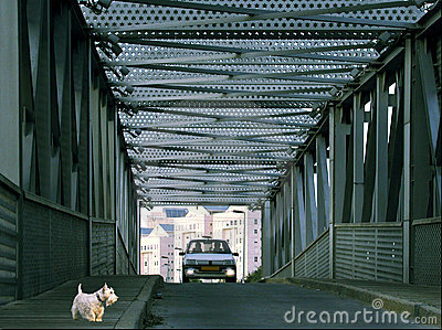 Dog with bridge