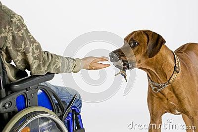 Dog bringing key