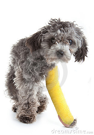 Dog with a broken leg