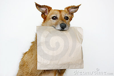 Dog with a brown bag