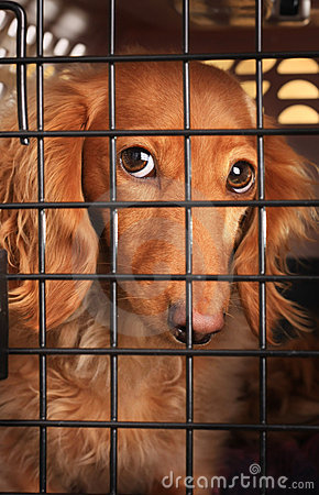 Dog in a cage.