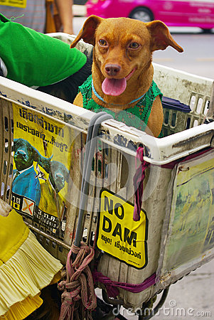 Dog with campaign sign for against the construction of a dam in Mae Wong National Park Editorial Image